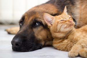 Haustiere senken Risiko für hohen Blutdruck